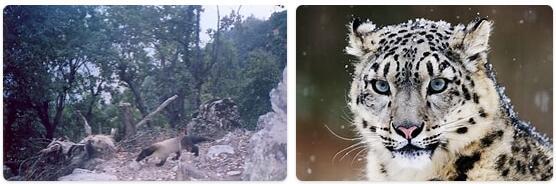 Afghanistan Native Animals