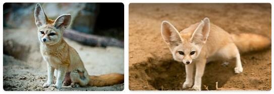 Algeria Native Animals