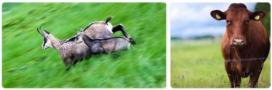 Andorra Native Animals