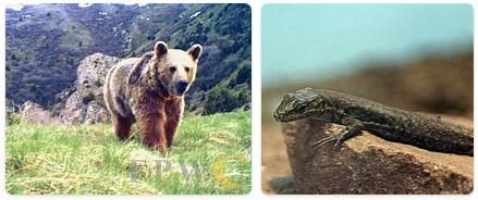 Armenia Native Animals
