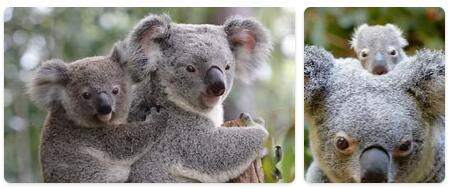 Australia Native Animals