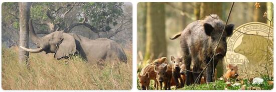 Austria Native Animals