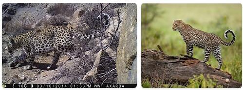 Azerbaijan Native Animals