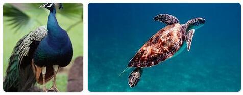 Bahamas Native Animals