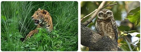 Bangladesh Native Animals