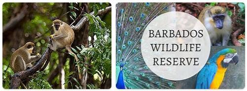 Barbados Native Animals
