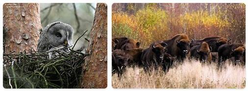 Belarus Native Animals