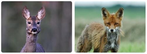 Belgium Native Animals