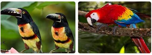 Belize Native Animals