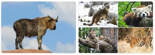 Bhutan Native Animals