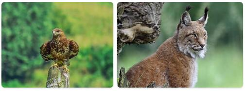 Bosnia and Herzegovina Native Animals
