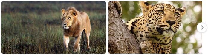 Botswana Native Animals
