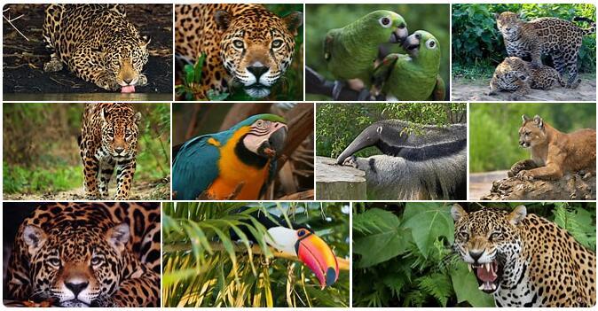 Brazil Native Animals
