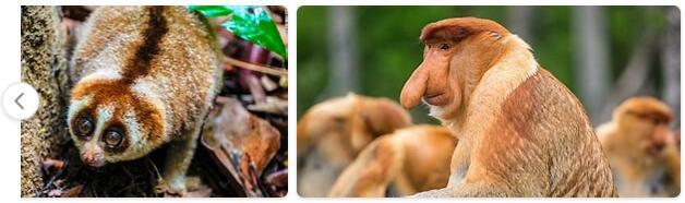 Brunei Native Animals