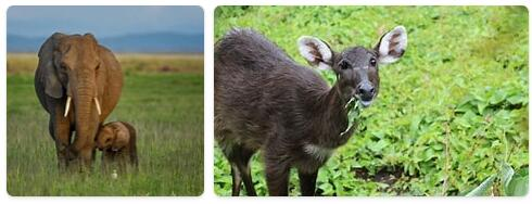 Burundi Native Animals