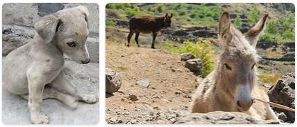 Cabo Verde Native Animals