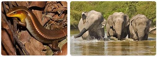 Cambodia Native Animals