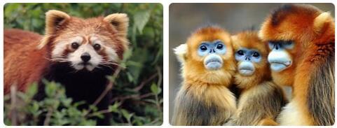 China Native Animals