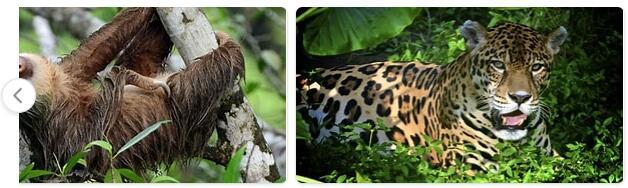 Colombia Native Animals