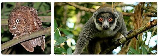 Comoros Native Animals