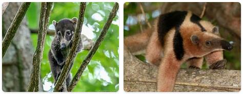 Costa Rica Native Animals