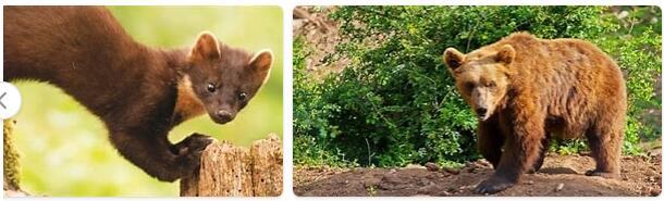 Croatia Native Animals