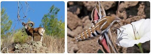 Cyprus Native Animals