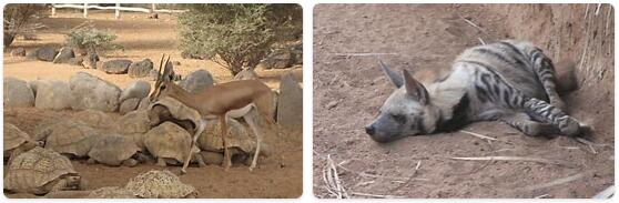 Djibouti Native Animals