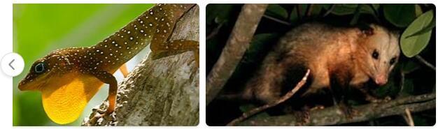 Dominica Native Animals