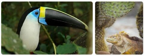 Ecuador Native Animals