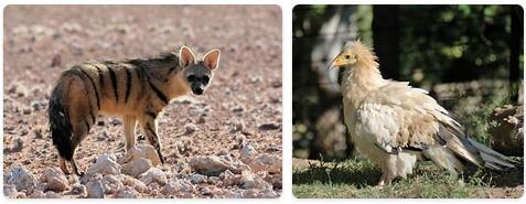 Egypt Native Animals