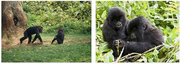 Equatorial Guinea Native Animals