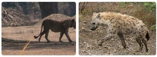 Eritrea Native Animals