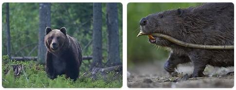 Estonia Native Animals