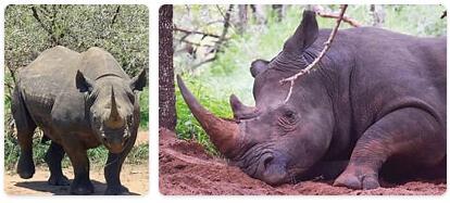Eswatini Native Animals