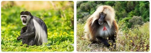 Ethiopia Native Animals
