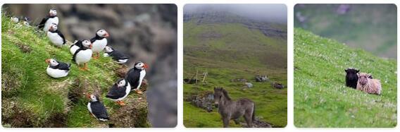 Faroe Islands Native Animals