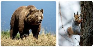 Finland Native Animals