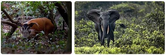 Gabon Native Animals