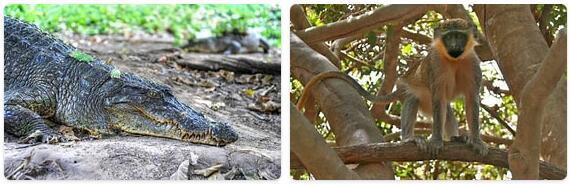 Gambia Native Animals