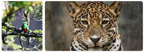 Guatemala Native Animals
