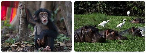 Guinea Bissau Native Animals