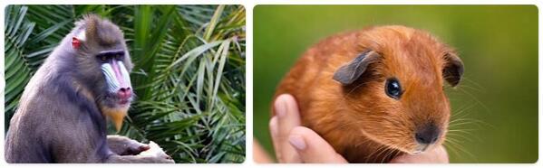 Guinea Native Animals