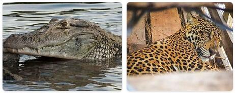 Guyana Native Animals