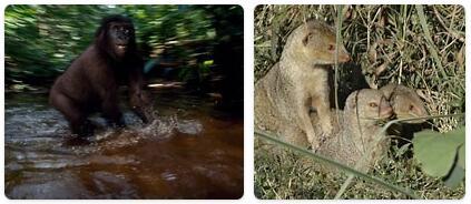 Haiti Native Animals