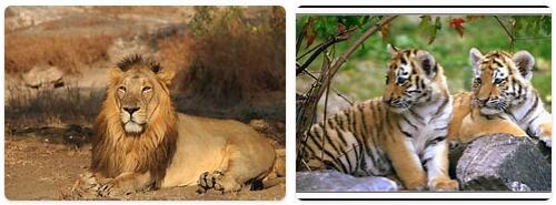 India Native Animals