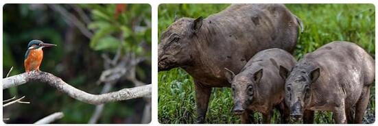 Indonesia Native Animals