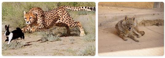 Iran Native Animals
