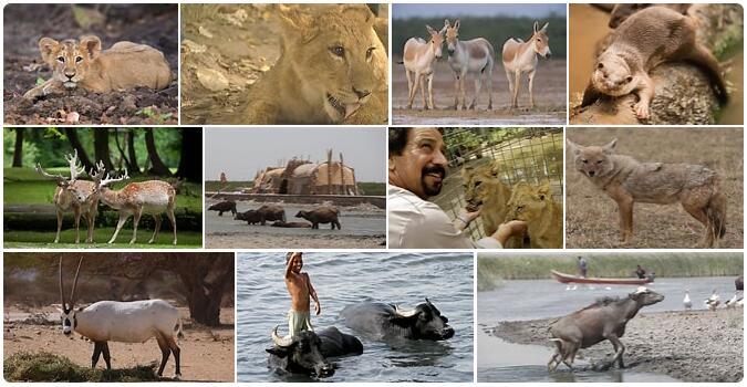 Iraq Native Animals