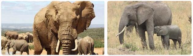 Ivory Coast Native Animals